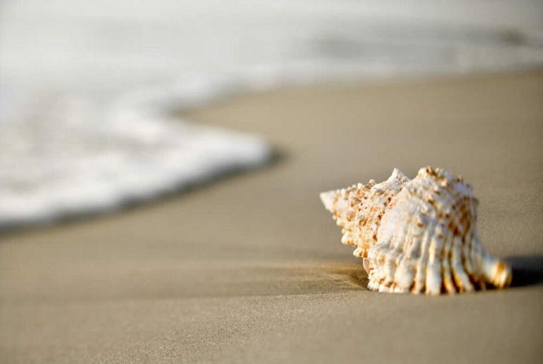 crp944x632-spiaggia-1